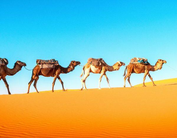 Tunezja – między piaskami Sahary ijaśminową rewolucją